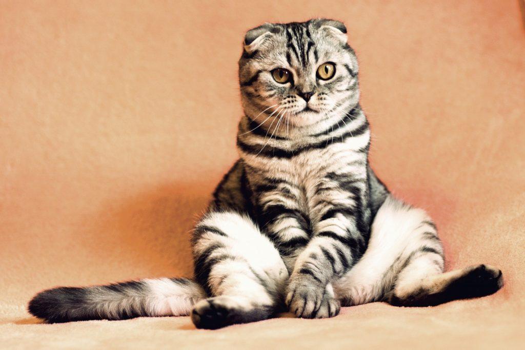 Do cats really have nine lives?